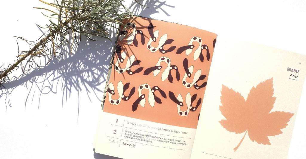 Livres de botaniques ludique et botanique. Collection Brèves de flore. Arbres Urbains